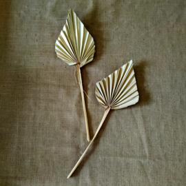 Palmblad maat S