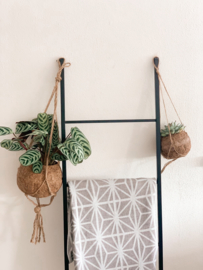 Kokodama set 'Hanging duo'