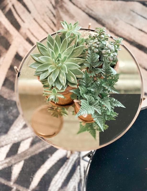 Kokodama set 'Plant set'