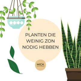 10 x planten die weinig zon nodig hebben