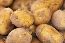 Frieslander aardappels