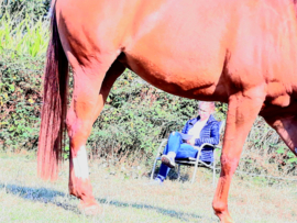 Paardencoachingstraject - 3 sessies - terug plaats vanaf 15/1/2021