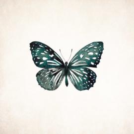 Wenskaart - Vlinder universe