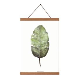 Planten poster - Musa Acuminata