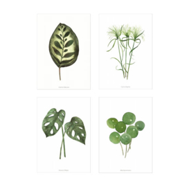 Kaartenset - Planten illustraties