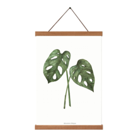 Planten poster - Monstera Obliqua