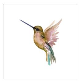 Wenskaart - Kolibrie
