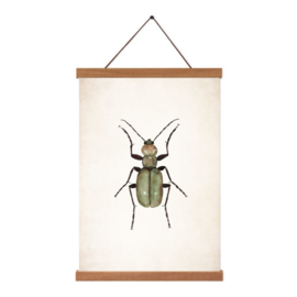Poster A5 - Beetle Green