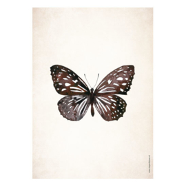 Poster A5 - Butterfly Universe