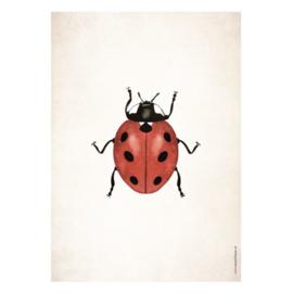 Poster A5 - Lieveheersbeestje