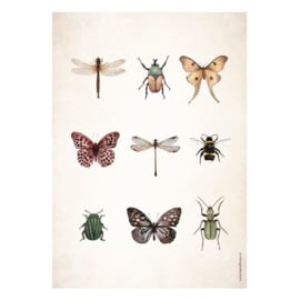 Poster A5 - Insects
