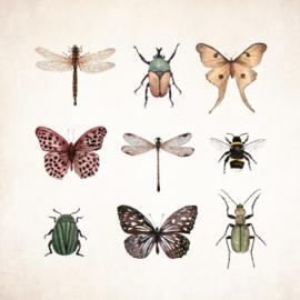Wenskaart - Insecten