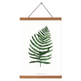 Planten poster - Polystichum Setiferum
