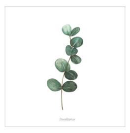 Wenskaart - Eucalyptus