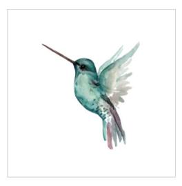 Wenskaart - Kolibrie Jade
