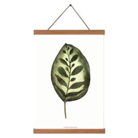 Planten poster - Calathea Makoyana