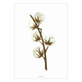 Kaart A6 - Gossypium (katoenplant)