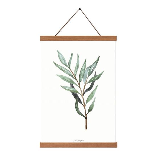 Planten poster - Olea Europaea