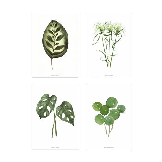 Kaartenset - Planten illustraties