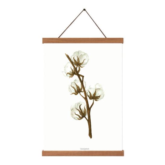 Planten poster - Gossypium