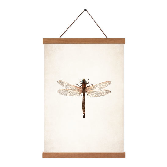 Poster A5 - Libelle
