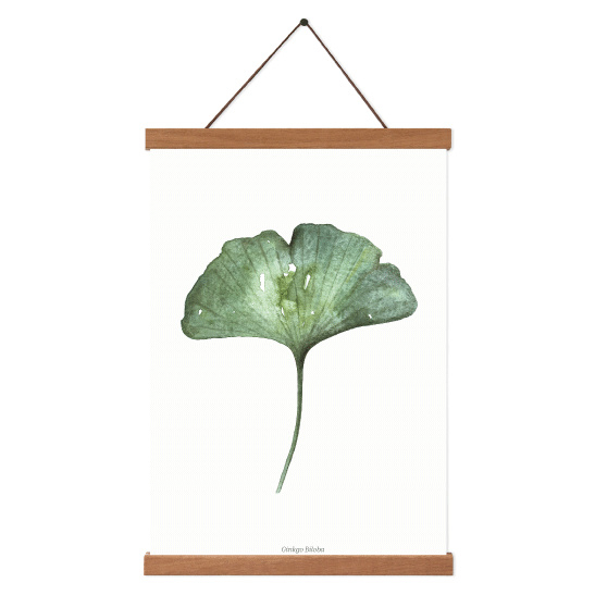 Planten poster  - Ginkgo Biloba