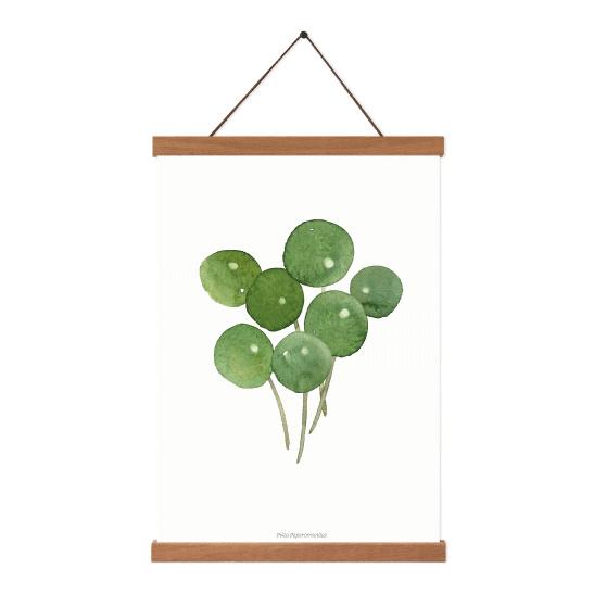 Planten poster - Pilea Peperomioides