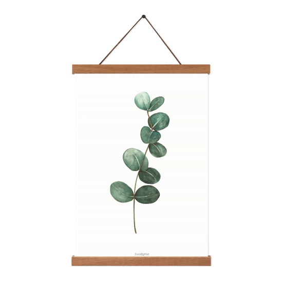 Planten poster - Eucalyptus