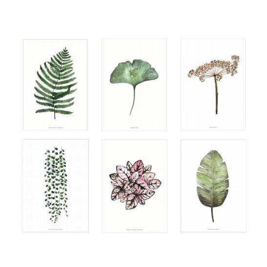 Kaarten set - Planten illustraties