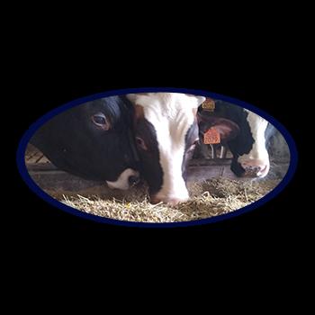 boerderij blom kalfsvlees didam