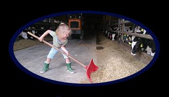 open boerderijdag boerderij blom didam kalfsvlees