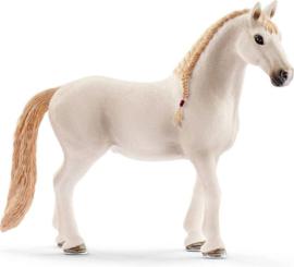 Paardenbox met Lusitano merrie 42368