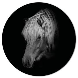 Muurcirkel Paard Black