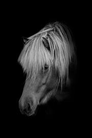 Plexiglas Paard Black