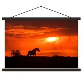 Schoolplaat Paard Zonsondergang