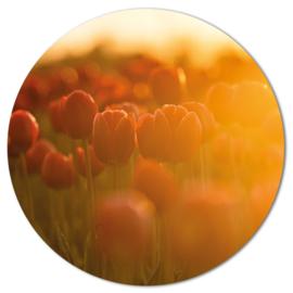 Muurcirkel Tulpen