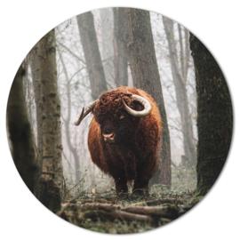 Muurcirkel Schotse Hooglander in mistig bos