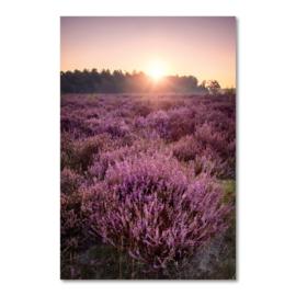 Canvas Heideveld bij Zonsopkomst
