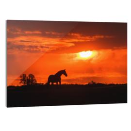 Plexiglas Paard Zonsondergang