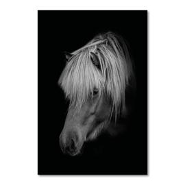 Canvas Paard Black