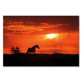 Canvas Paard Zonsondergang