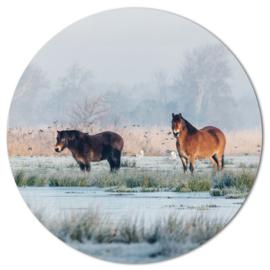 Muurcirkel Exmoorpony's winter