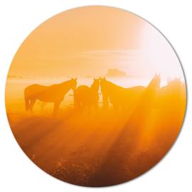 Muurcirkel Paarden in de mist