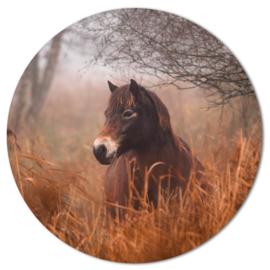 Muurcirkel Pony