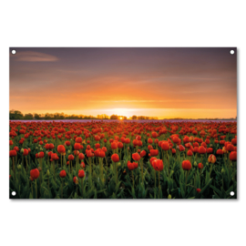 Tuinposter Tulpenveld