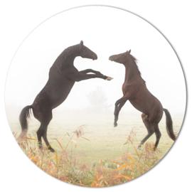 Muurcirkel Steigerende Paarden