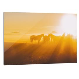 Plexiglas Paarden Mist