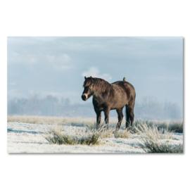 Canvas Exmoor Pony Winter