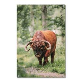 Tuinposter Schotse Hooglander Stier