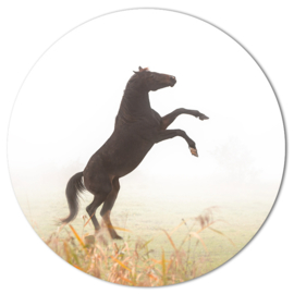 Muurcirkel Steigerend Paard